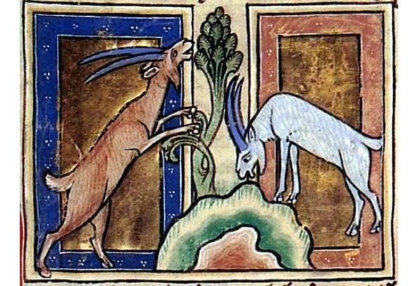 Изображение козла в средневековом бестиарии.