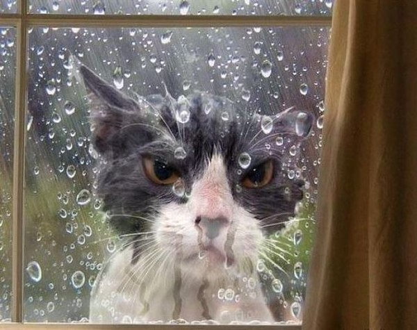 кот ОЧ сердитый