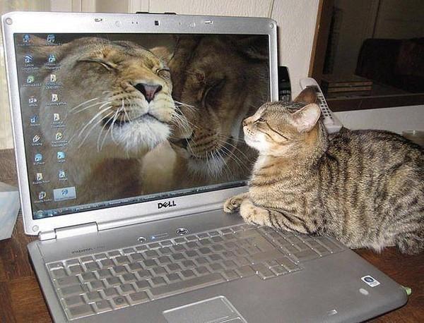 кот-тролль