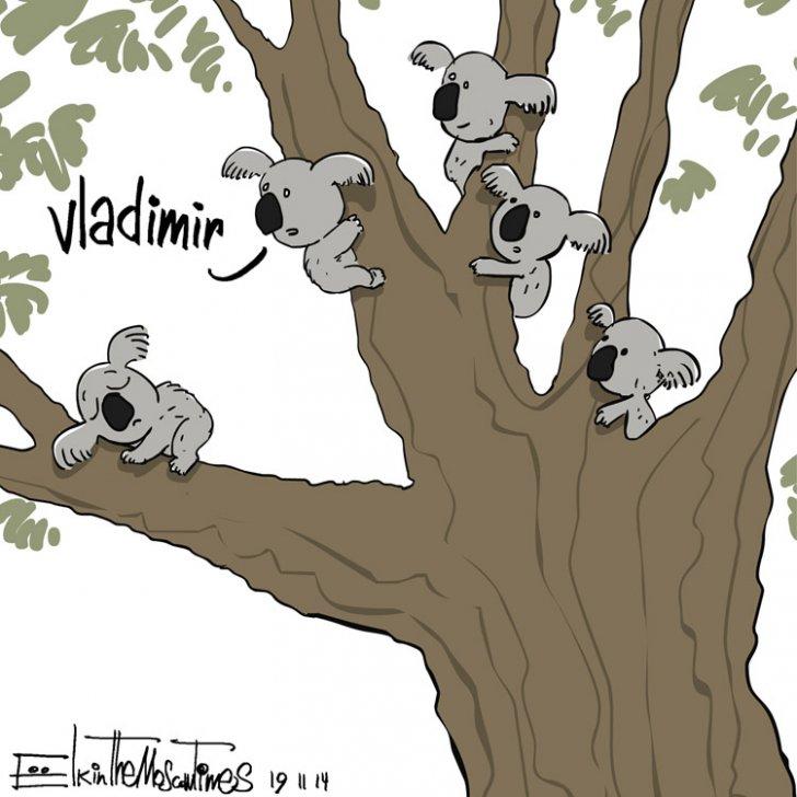 коала111