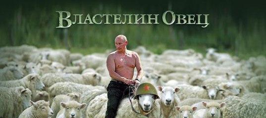 пу и овцы1