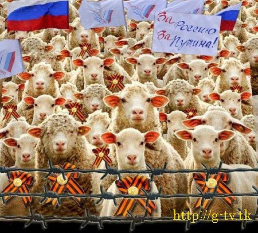 пу и овцы3