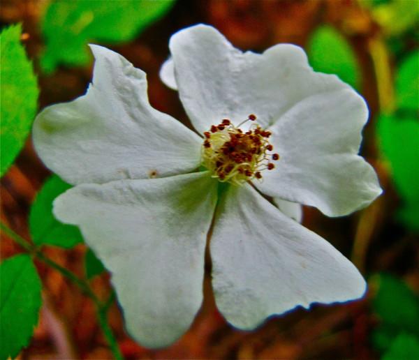 whiteflower 2 bigger
