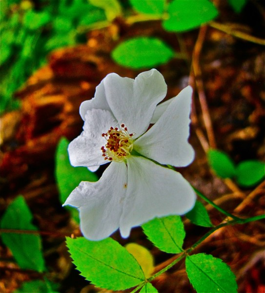 whiteflower 1
