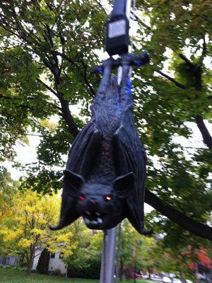 Bat - Up-Close