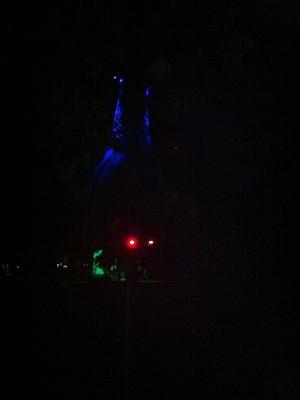 Bat - At Night