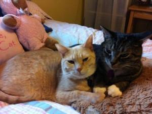 Brotherly Love - 2012-1