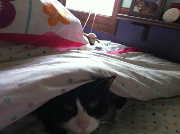 Big Buddy under the covers 02