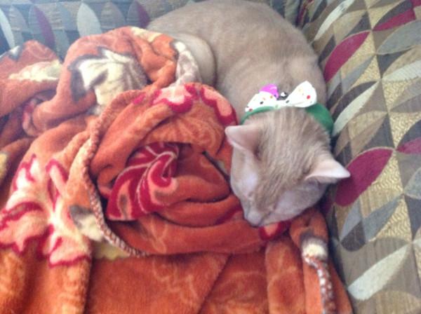 Pippin - megan's blanket 01