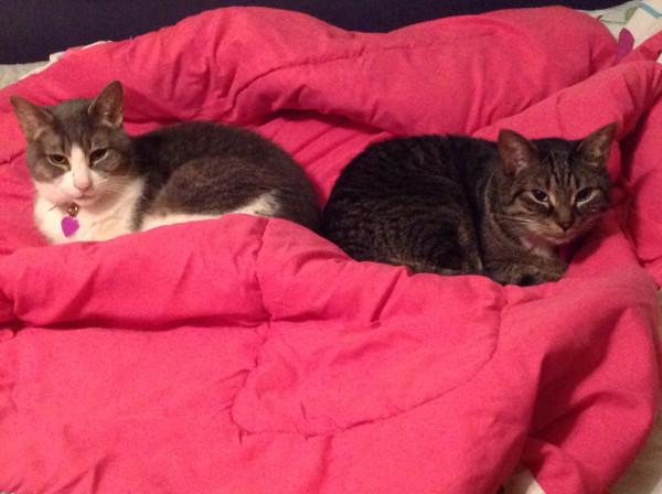 Roo & Kirk - comforter