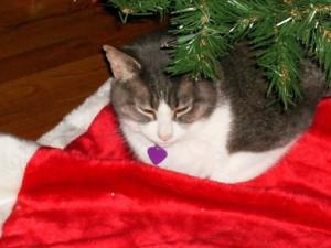 Roo Christmas 2009