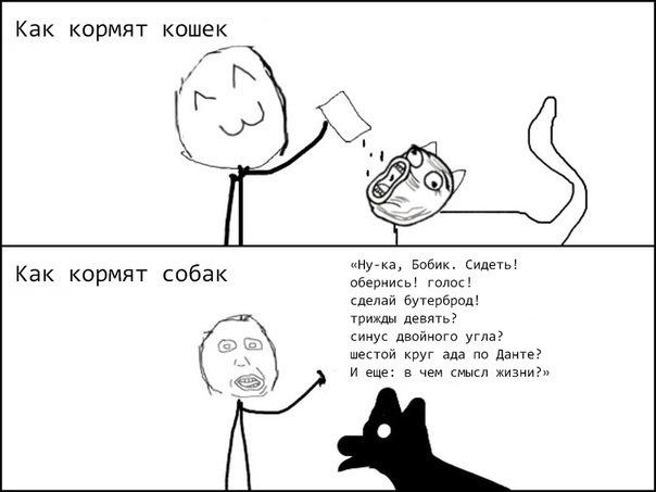 Как кормят собак