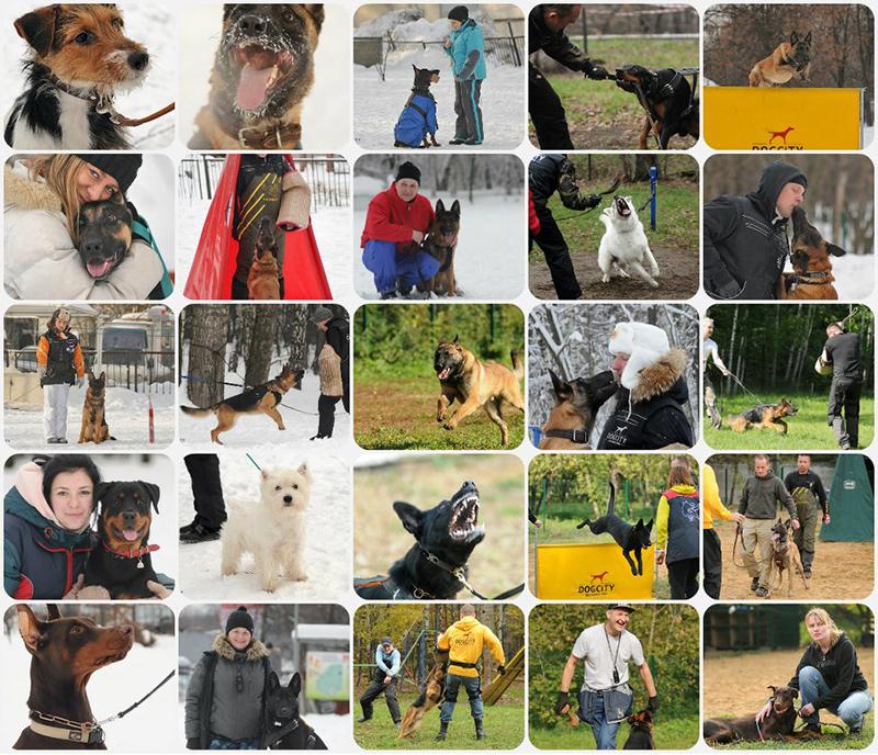 Dogcity - дрессировка собак