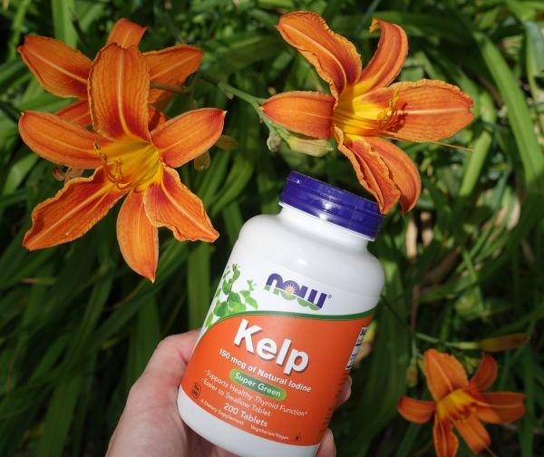 now_kelp_1.jpg