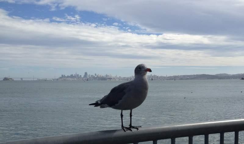 Вид на Сан-Франциско с набережной в Саусалито