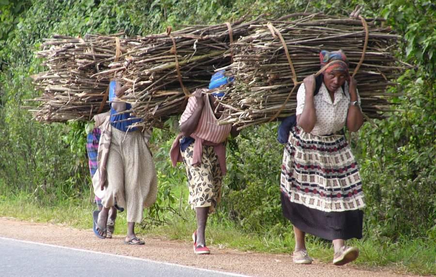 Женщины из глухой индийской деревни совмещают два запретных для россиянок занятия: рубку леса и подъём тяжестей