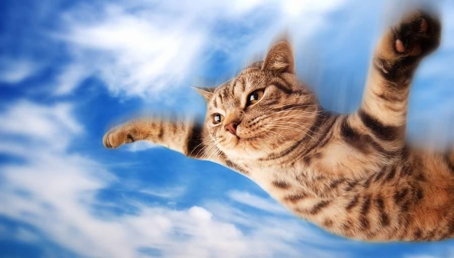 Кот летающий картинка