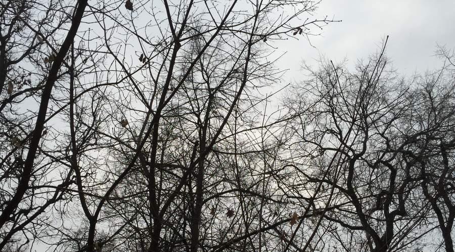 Первое утро зимы 2014 года