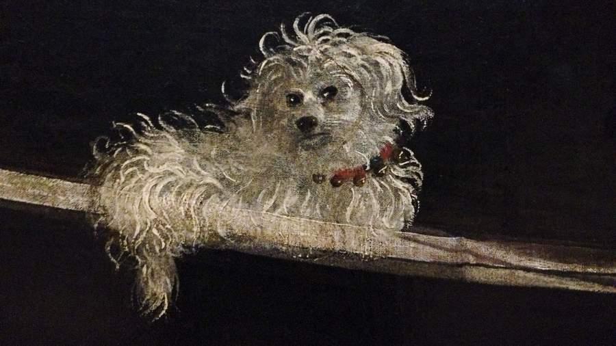 Собака с картины Витторе Карпаччо