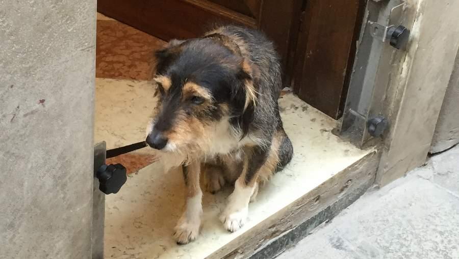 Собака ждёт хозяина на пороге