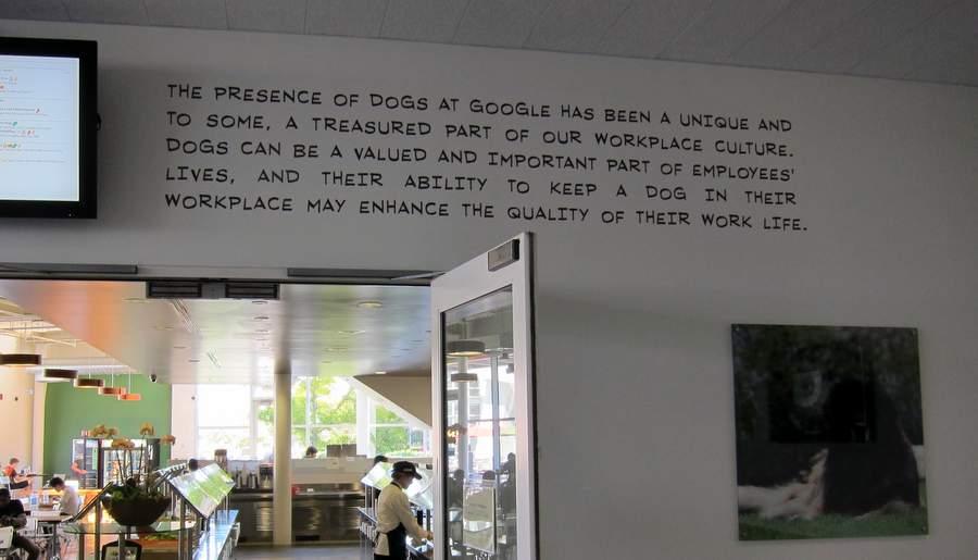 Собачья политика Гугла