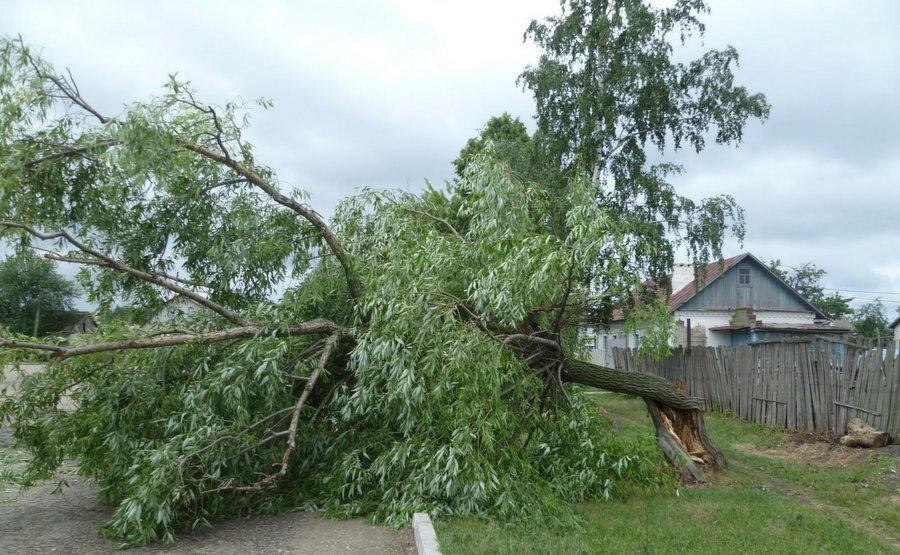 Последствия ветра в Липецкой области