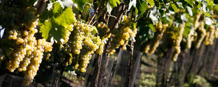 Винитали 2012, сицилийские вина