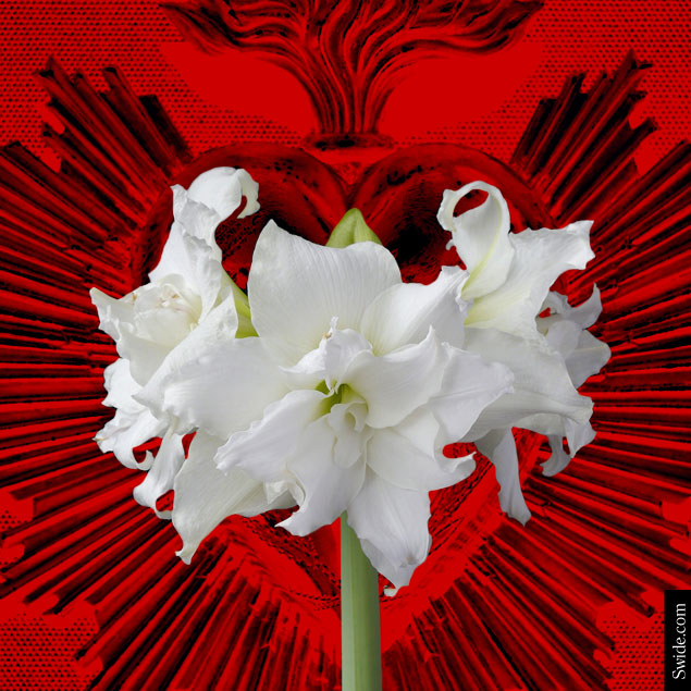 top-10-valentines-day-gift-ideas-2015-for-women-best-present-for-wife-or-girlfriend-amaryllis-bulb
