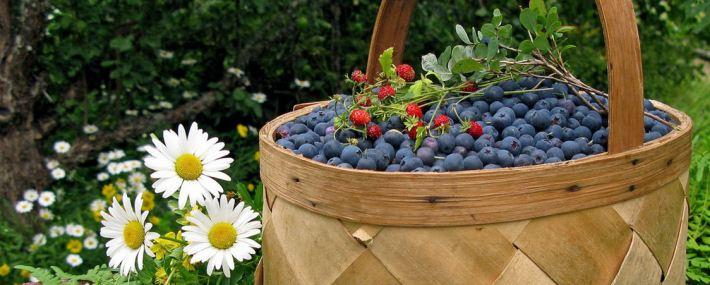 самые здоровые продукты питания