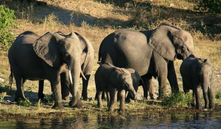 Национальный парк Ботсваны