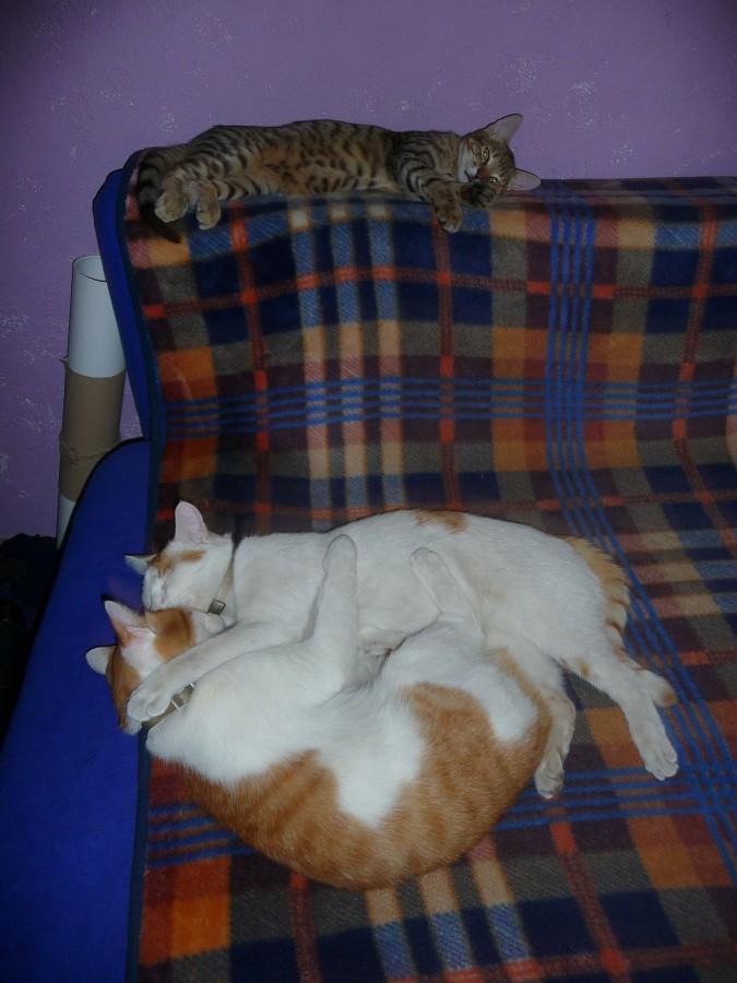 коты.сентябрь 2012.