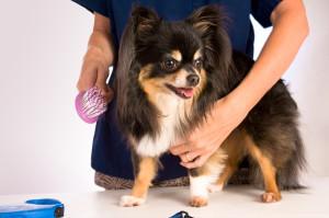 dog-grooming-insurance (1)