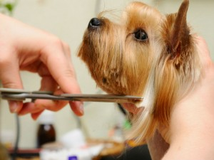 Reputable-Pet-Groomer-Carmichael-CA