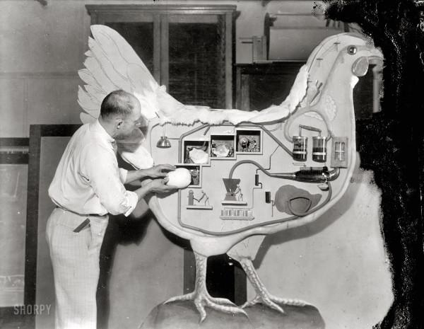куриная лаборатория