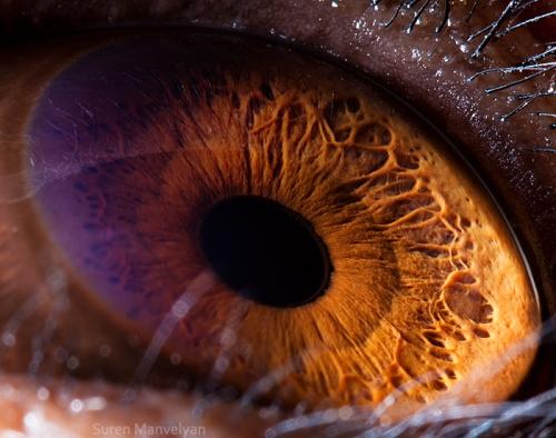 глаза шимпанзе