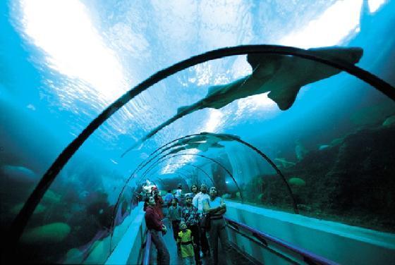 аквариум, национальный, санто доминго