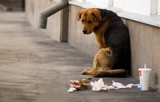 бездомный-5