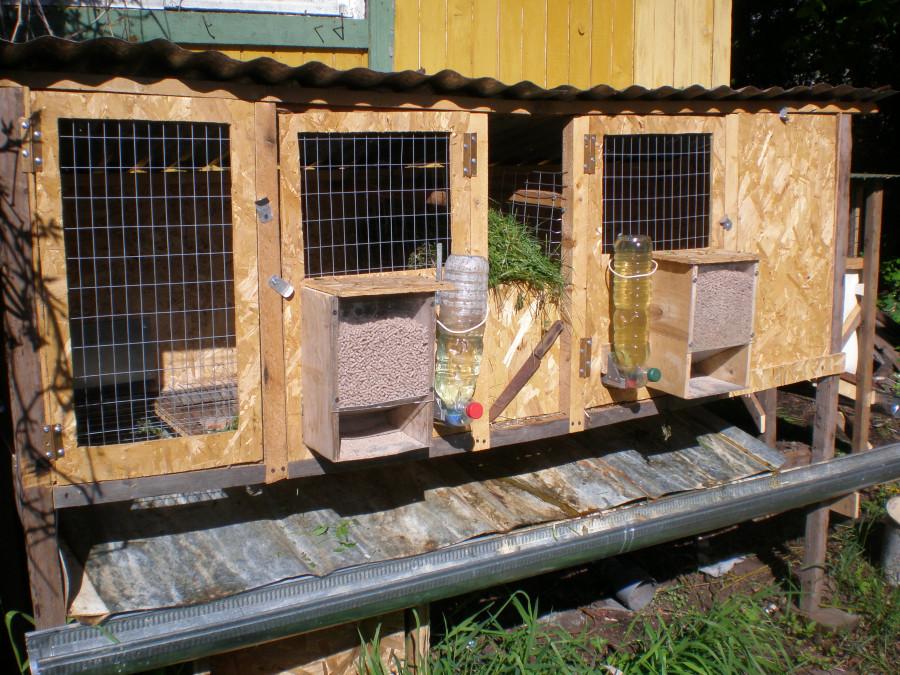 Разведение уход за кроликами в домашних условиях 40