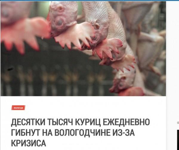 Десятки тысяч кур гибнут ежедневно