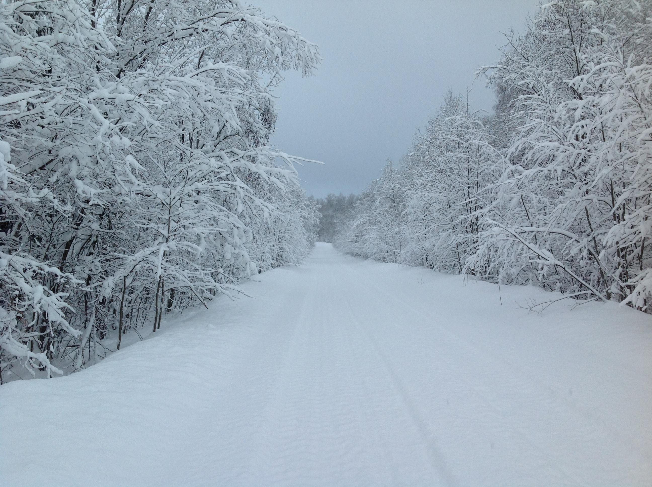 Вологодчина, зимняя дорога