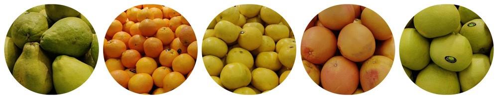 citrus1-a.jpg
