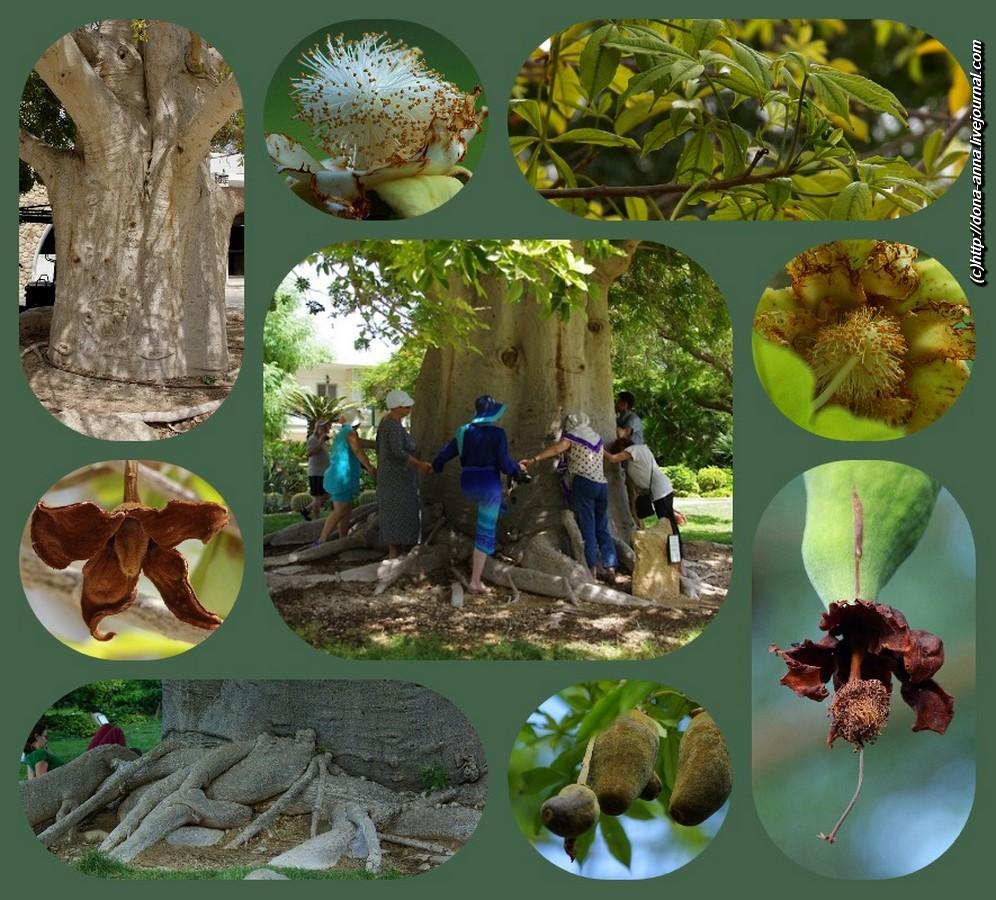 collage-baobab-a.jpg