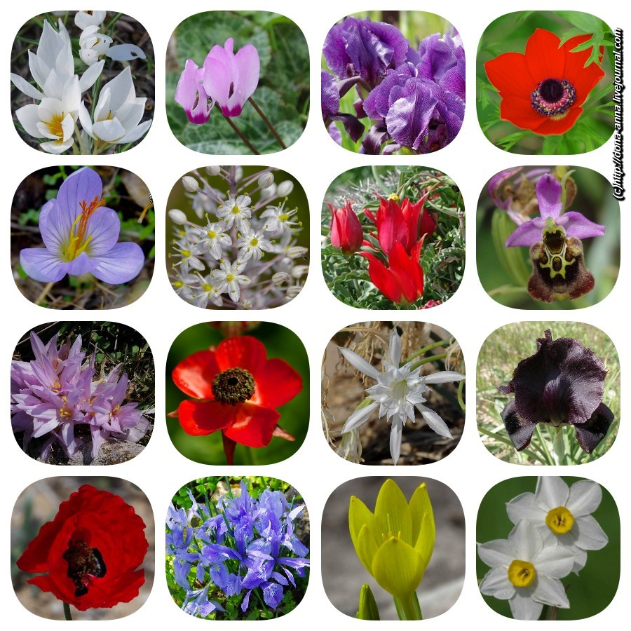 Flowers_collage-a.jpg
