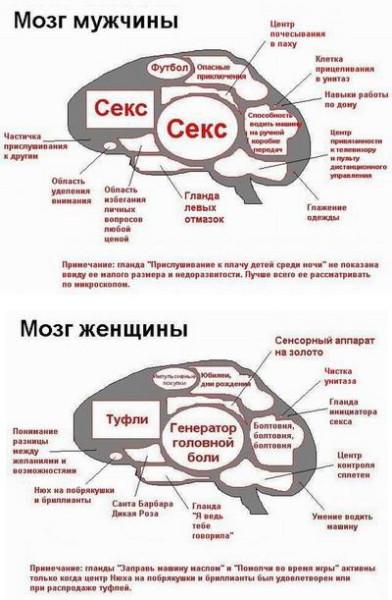 mozgi