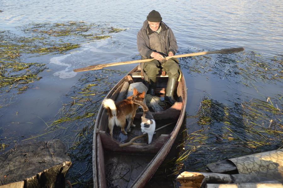 кот плывет на лодке