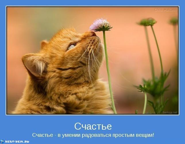 Счастье-Счастье-в-умении-радоваться-простым-вещам