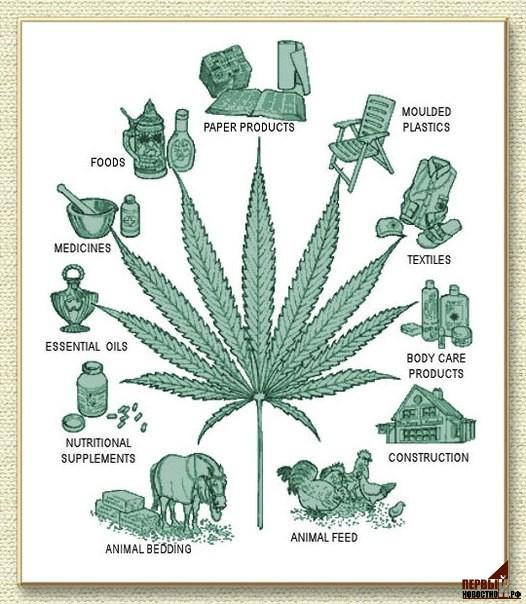 Конопля заговор марихуана графика