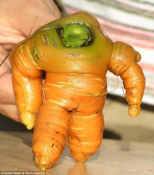 carrot5