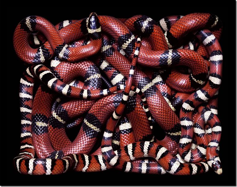 страшные змеи