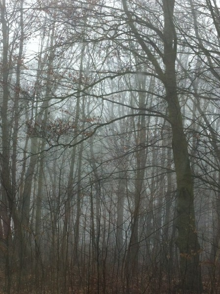 mist 110315 6